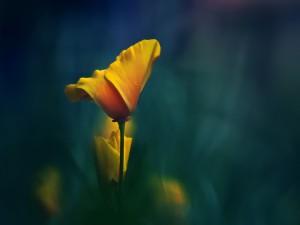 Postal: Bonita flor amarilla
