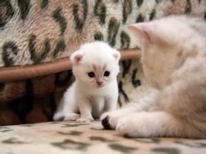 Gatito mirando a mamá