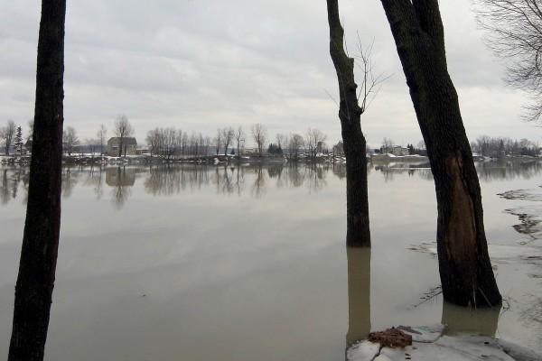 Troncos de árbol en al agua