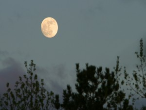 La luna llena en el cielo al llegar la noche