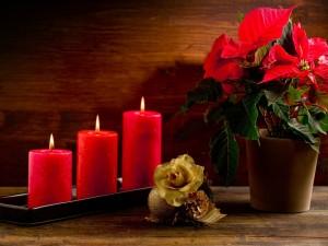 Flores y velas rojas para Navidad