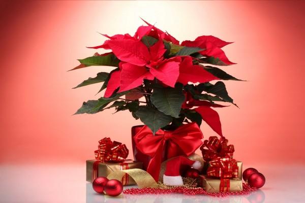 Regalitos para la Nochebuena