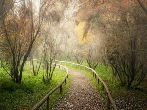 Camino con hojas en el campo