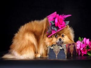 Perrito con un elegante sombrero