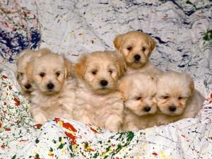 Postal: Lindos cachorros