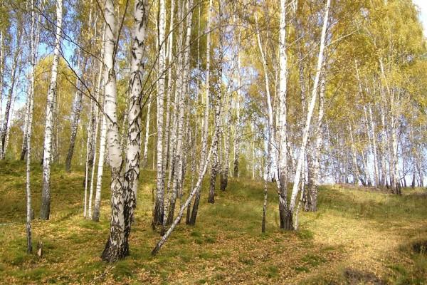 Árboles al inicio del otoño