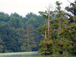 Lago de aguas verdes entre grandes árboles