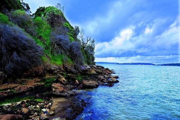 Ramas y piedras en la costa