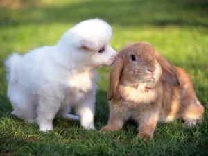 Un conejo y un perro en la hierba