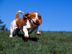 Un perro que corre en la hierba