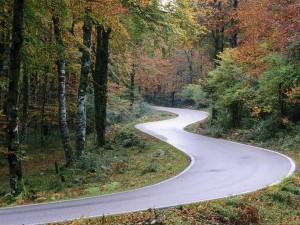 Carretera con curvas en el bosque