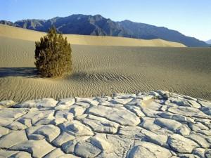 Postal: Árbol solitario en la arena