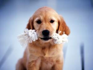 Perrito con una cuerda en la boca