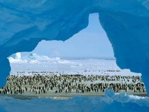 Postal: Pingüinos en la Antártida
