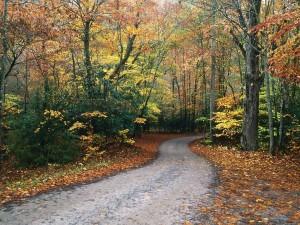 Postal: Camino estrecho visto en otoño