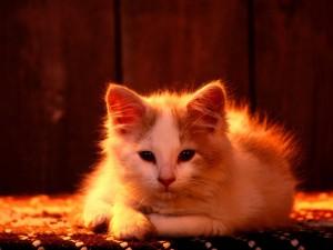 Postal: Un gatito en la alfombra