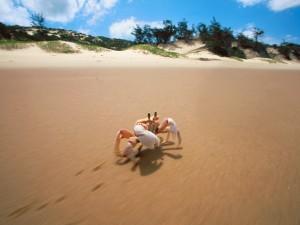 Cangrejo en la arena