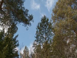 Viendo el cielo entre los árboles