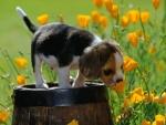 Perrito sobre un tonel oliendo las flores