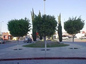 Árboles y pinos