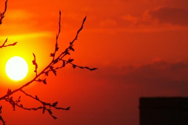 El sol y la rama del árbol