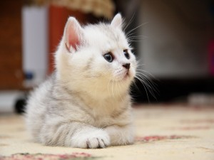 Postal: El gato en la alfombra