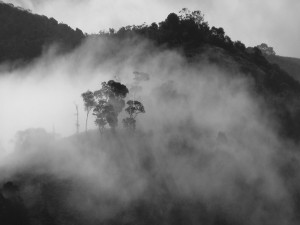 Postal: Niebla envolviendo a los árboles