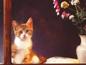 Postal: Un gatito mirando por la ventana
