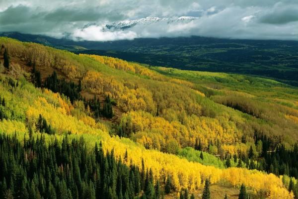 Bonito paisaje con árboles de distintos colores
