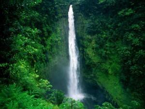 Cascada de Akaka, en el Parque Estatal de las Cataratas Akaka (Hawái)