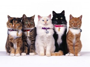 Postal: Gatos en fila