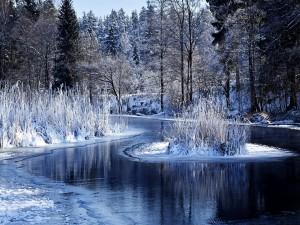 Bosque y lago congelados