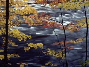 Árboles junto al río en otoño