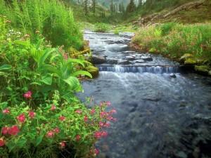 Postal: Flores y plantas en las orillas del río