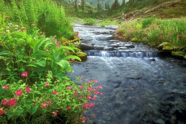 Flores y plantas en las orillas del río