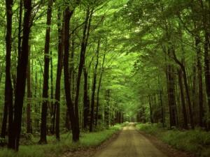 Postal: Carretera en el bosque