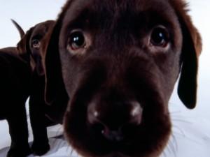 Postal: Perro cerca de la cámara