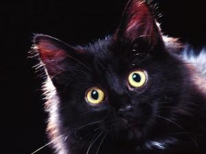 Postal: Gato negro con ojos llamativos