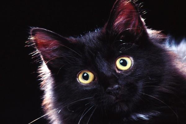 Gato negro con ojos llamativos