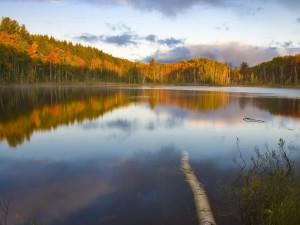 El tronco de un árbol en el lago