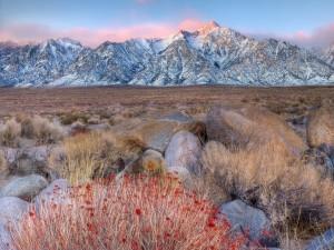 Vegetación seca al pie de las montañas