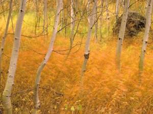 Postal: Árboles y gramíneas arrastradas por el viento