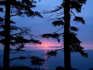 Postal: Vista del sol al atardecer entre dos árboles