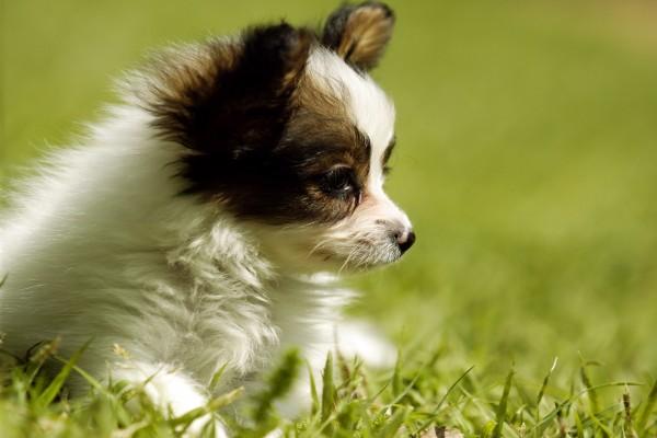 Perrito triste en la hierba