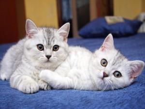 Dos bonitos gatos