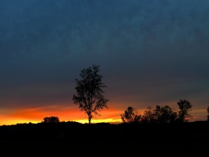 Postal: Árbol solitario al anochecer