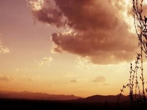 Postal: Mirando al cielo junto a la hierba