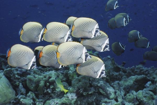 Banco de peces de color gris