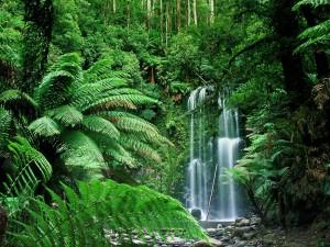 Beauchamp Falls en Beech Forest, Victoria (Australia)