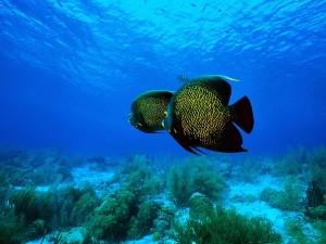 Dos bonitos peces bajo el mar